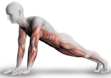 Como usar as diferentes formas de contração muscular. Um estudo comparativo entre contração muscular isométrica, isotônica e isocinética