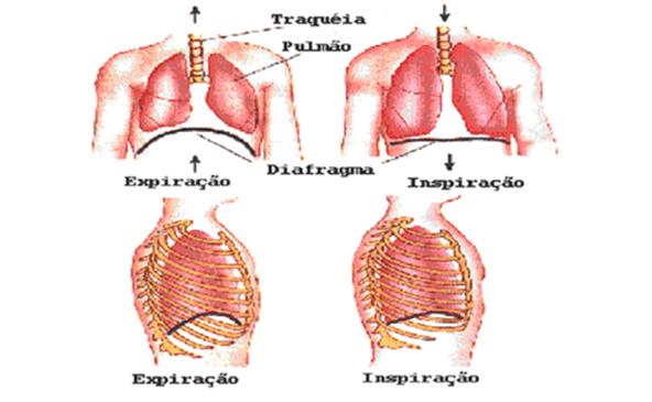 avaliacao-pneumofuncional-nadadores-1