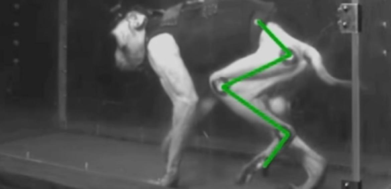 Dispositivo permite que macacos paralisados voltem a andar