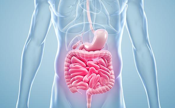 """O que é o mesentério, o """"novo"""" órgão do corpo humano identificado por cientistas"""