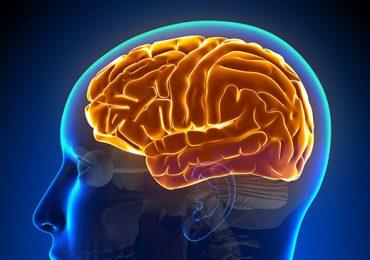Pesquisador brasileiro apresenta em evento da WCPT seus estudos sobre Neurofisiologia da Dor e mecanismos de interação cognitivo-emocionais
